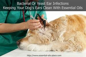 Best 25+ Bacterial infection ideas on Pinterest | Sore ...