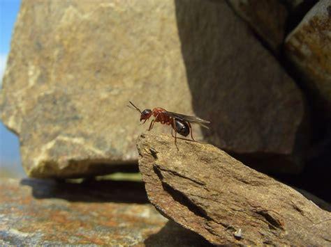Obstfliegen Im Bad by Hausmittel Gegen Maden Maden Und Fruchtfliegen Im M