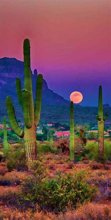 images  arizona  pinterest grand