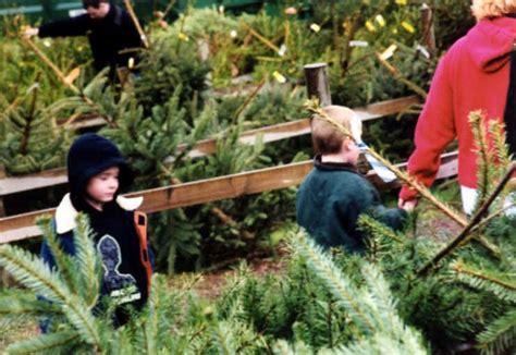 photographs christmas tree farm chesham london