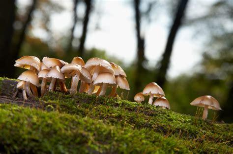 Bei Uns Wachsen Pilze Im Garten by Das Wachstum Der Pilze 187 So Schie 223 En Sie Aus Dem Boden