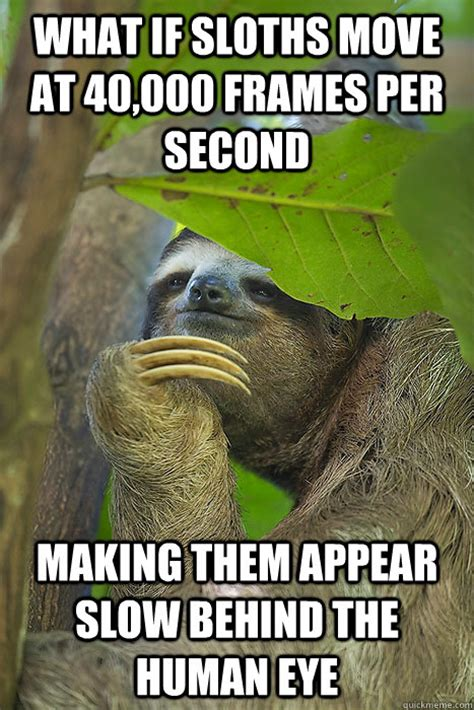Make A Sloth Meme - what if sloths move at 40 000 frames per second making them appear slow behind the human eye