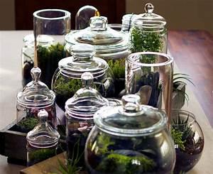 Pflanzen Für Terrarium : garten im glas so geht s strohballenbau ~ Orissabook.com Haus und Dekorationen