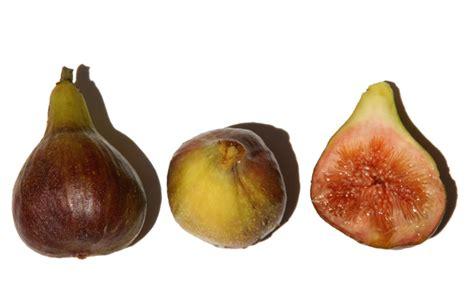 comment cuisiner les figues figue fleur comment manger la la cuisine du jardin
