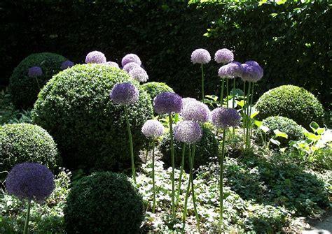 Garten Gestalten Mit Eiben by Buchsbaum Garten Kugelformen Allium Und Buchsbaumkugeln