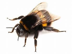 Wespen Im Winter In Der Wohnung : insektenstiche was sticht sie wenn es kalt ist biteling ~ Frokenaadalensverden.com Haus und Dekorationen