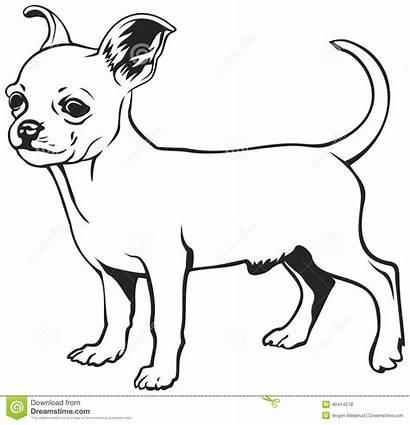 Chihuahua Dog Breed Breeds Razza Cane Della