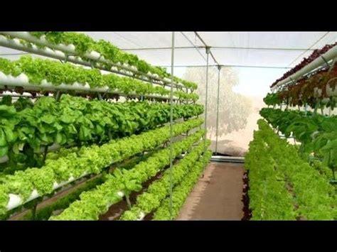 gana  invirtiendo  en cultivos hidroponicos