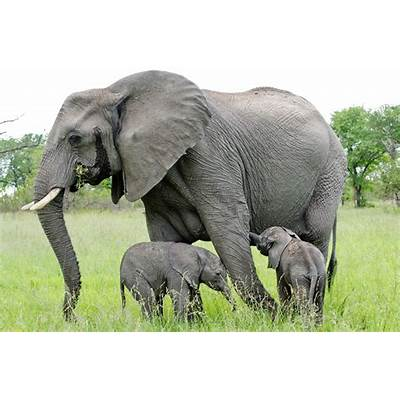 African Elephants.pgcps mess - Reform Sasscer without