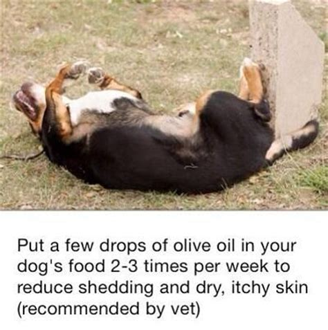 Home Remedies For Shedding Dogs by 25 Best Ideas About Shedding Remedies On