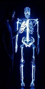 1000 images about Anatomical Art on Pinterest