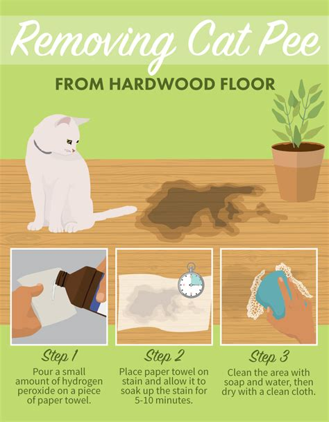 cat on hardwood floor stain removal tips for pets gimme info