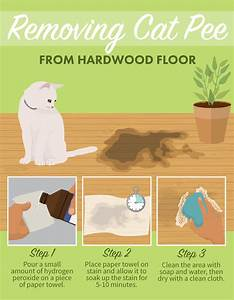 Stain removal tips for pets gimme info for Cat urine on hardwood floors