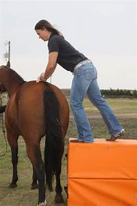 Equine Chiropractic  General Principles And Applications