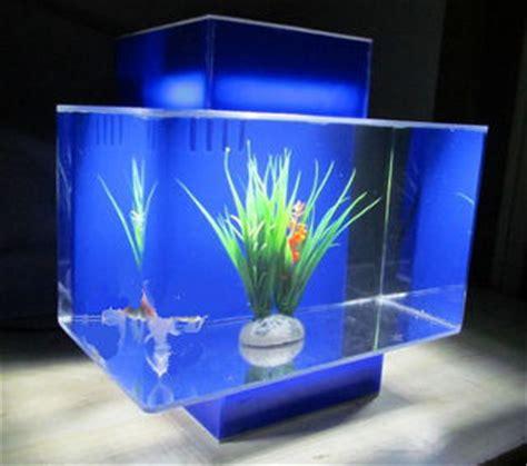 nano fish   nano aquarium  fish doctor fish breeder
