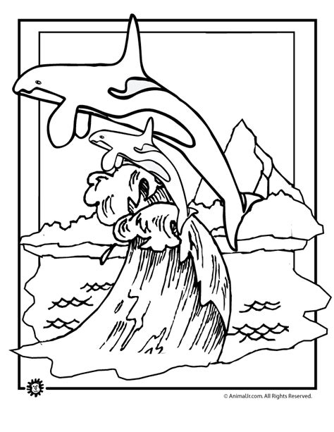 whale coloring pages    print