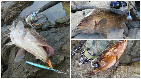 grouper fish species