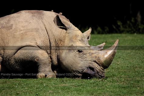 photo rhinoceros planete sauvage port pere photo vend 233 e