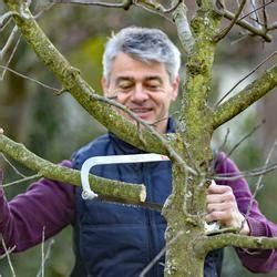 apfelbaum schneiden wassertriebe obstb 228 ume veredeln durch kopulation mein sch 246 ner garten