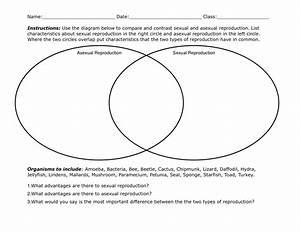 27 Asexual Vs Sexual Reproduction Venn Diagram