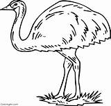 Emu Coloring Ausmalbilder Strauss Printable Easy Spinne Cartoon Preschool Paper Bird Coloringall Any sketch template