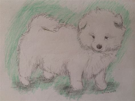 pictures realistic cute animals  draw drawings art