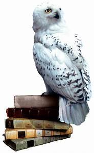 Image - Hedwig books.png | Harry Potter Wiki | FANDOM ...