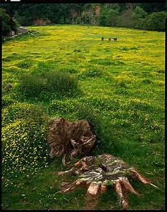 meadow sammleredition