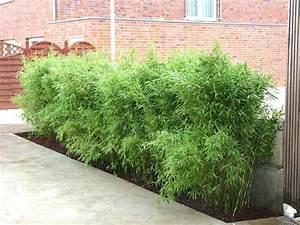 Bambus Als Zimmerpflanze : der bambus modisch praktisch wundersch n ~ Eleganceandgraceweddings.com Haus und Dekorationen