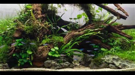 id 233 e pour aquarium plant 233 beautifull aquascaping