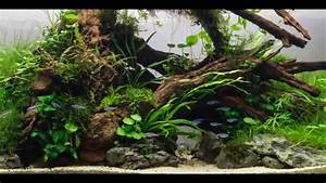 Idee Decoration Aquarium : id e pour aquarium plant beautifull aquascaping youtube ~ Melissatoandfro.com Idées de Décoration