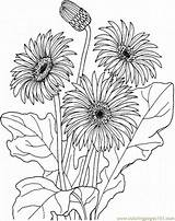 Flowers Gerbera Coloring Pages Printable Flower Daisy Adults Floral Daisies Designs Natural Drawing Pretty sketch template