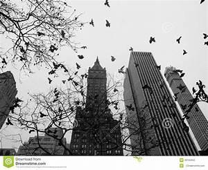New York City Central Park Noir Et Blanc Photo stock ...