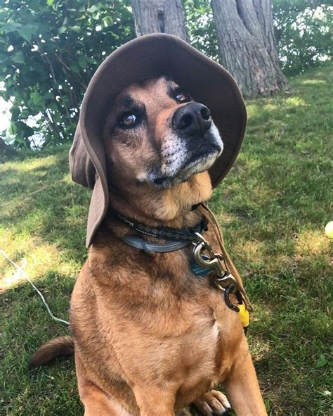 Dad Hat For Doggo On Entertaining Pet Dogs Cutedogs