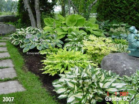 hosta landscaping ideas 25 best ideas about hosta gardens on pinterest hosta flower hosta varieties and shade