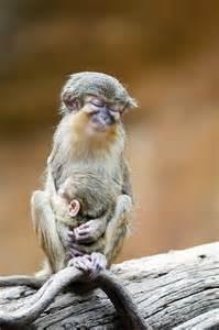 Baby Monkey Hugging Animal