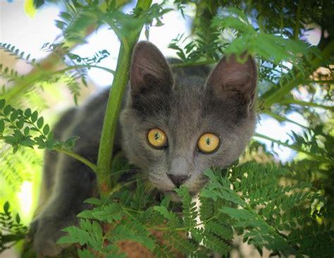 Pflanzen Für Katzen Geeignet by 10 Geeignete Pflanzen F 252 R Katzen Katzenblog De
