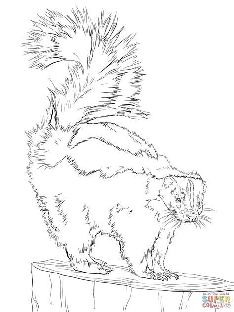 Kleurplaat Stinkdier by American Striped Skunk Coloring Page Free