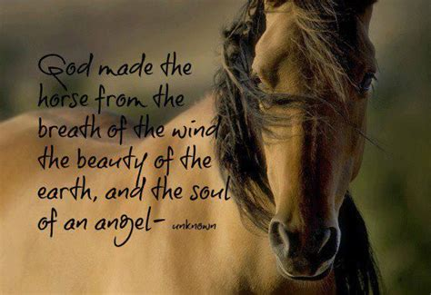 sayings quotes horse poems sweet horsey equine