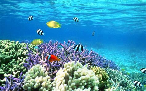 3d Animated Fish Wallpaper - awesome 3d animated aquarium wallpaper free
