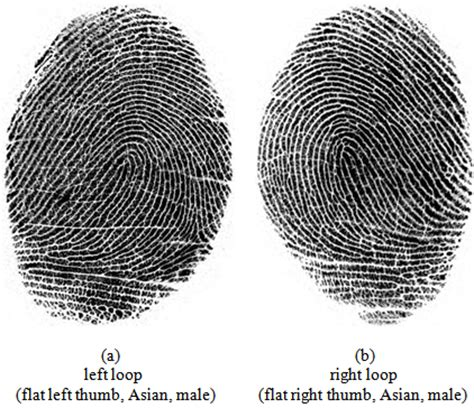 fingerprint patterns   analysis  gender