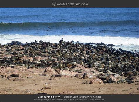 Skeleton Coast NP Wildlife Photos – Images & Pictures of ...