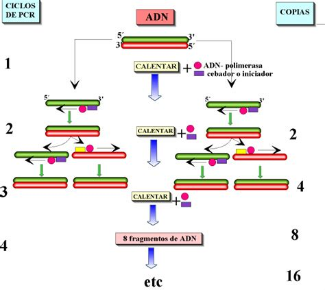 bureau de la pcr pcr analytical biotech