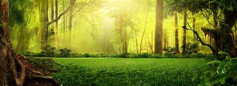 750x1334 beautiful snow green nature o sonho de fundo verde da floresta o pano de fundo o