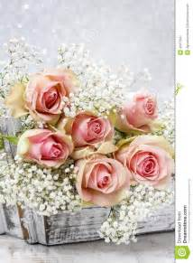 baby breath flowers beautiful pink roses and gypsophila baby 39 s breath flowers