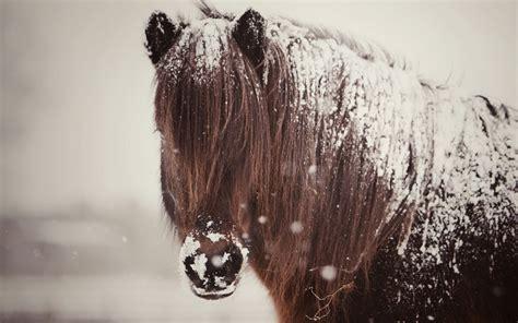 winter horse wallpaper wallpapersafari