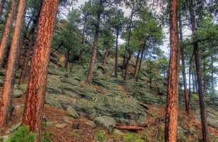Black Hills South Dakota Trees