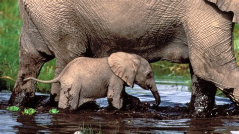 Baby Tales About Nature Pbs