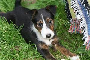 ravensgate border collie rescue: Jack Russell Terrier mix ...