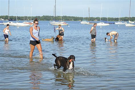 commissioners find dog beach busy  steamy night news